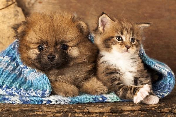 due cuccioli avvolti da una coperta