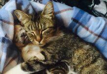 gatto dorme con cagnolino