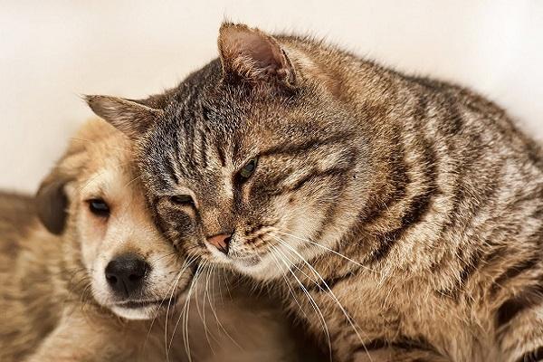 cane e gatto muso contro muso
