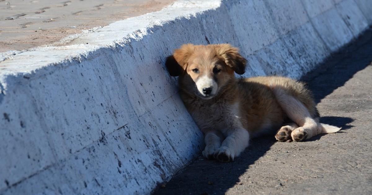 cucciolo di cane in strada