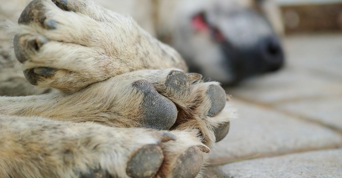 cucciolo di cane a terra