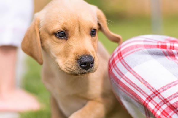 Cucciolo di cane, può vivere fuori o è meglio che abbia un riparo?