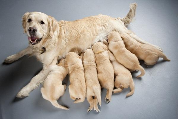 Cucciolo di cane, quando può mangiare cibi solidi? Ecco cosa sapere