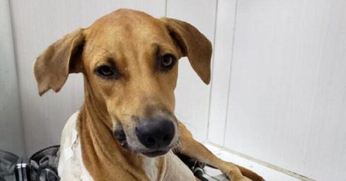 delphina cucciola salvata giornalista ospedale