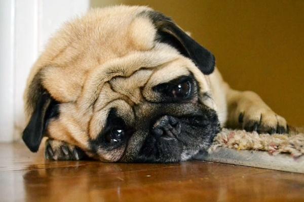 Depressione post vacanze del cane: come fare per tirare su il nostro Fido