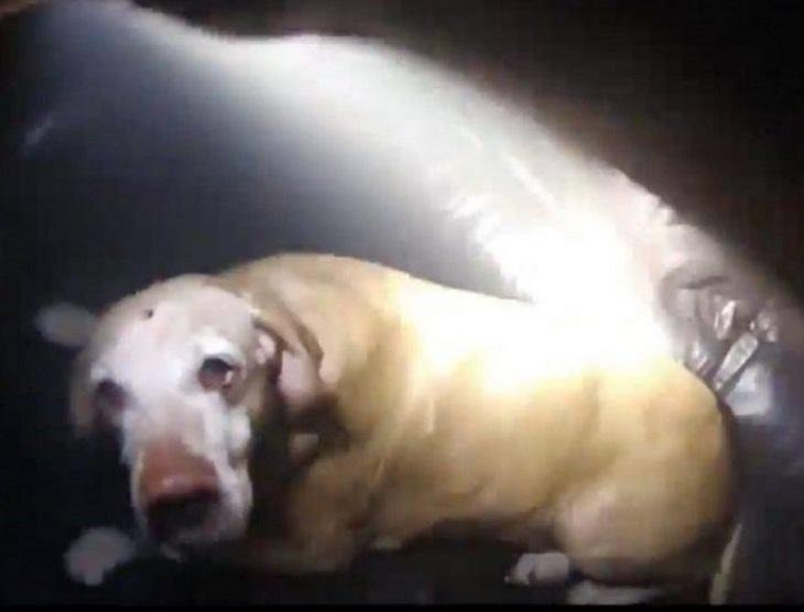 diesel cane terrorizzato paralizzato