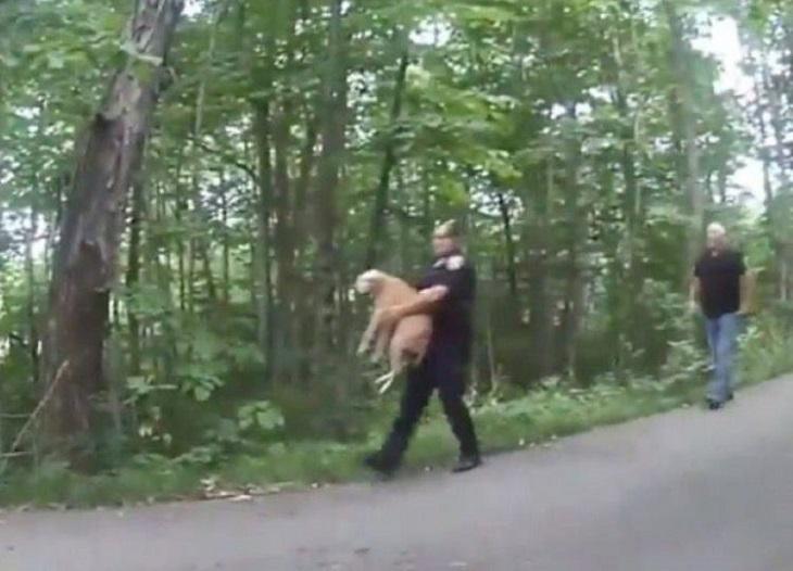 diesel cane tirato fuori abitazione