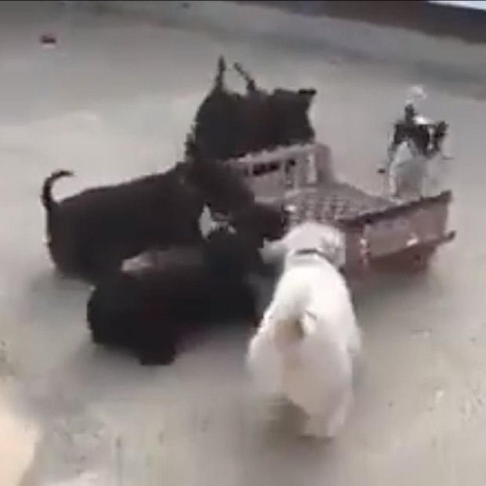 cuccioli carrello gioco entusiasmante