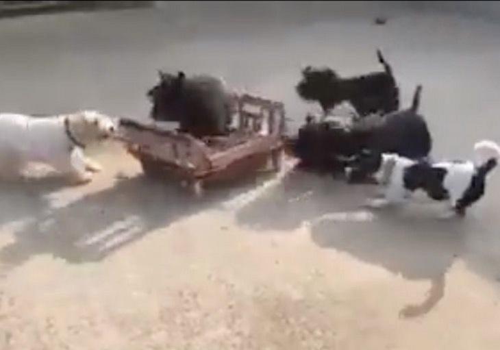 cuccioli piattaforma rotelle gioco