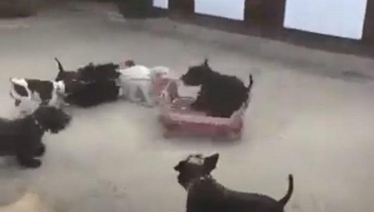 Dolci cagnolini scoprono un gioco divertentissimo (VIDEO)