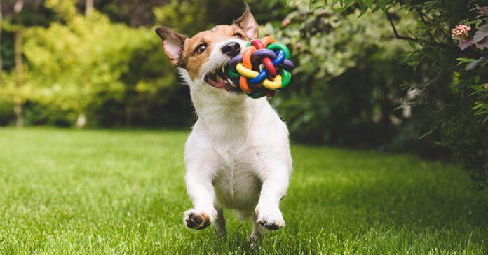dolci cagnolini scoprono un gioco divertente