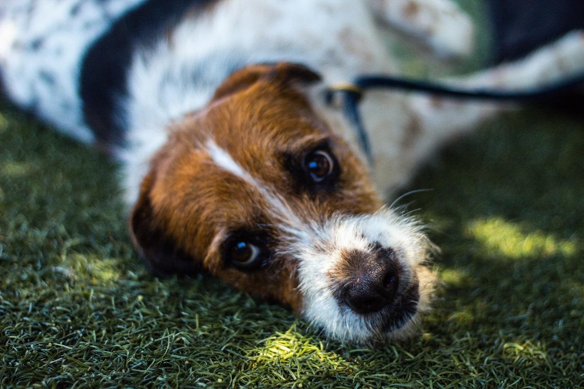 Cani, dove adottarli in Calabria: piccola guida