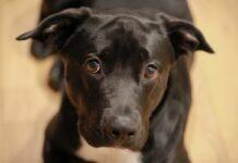 cane nero su pavimento