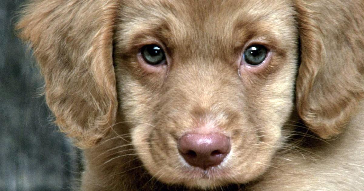 Cani, dove adottarli in Emilia Romagna: piccola guida