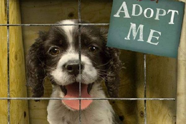 Cani, dove adottarli in Veneto: piccola guida