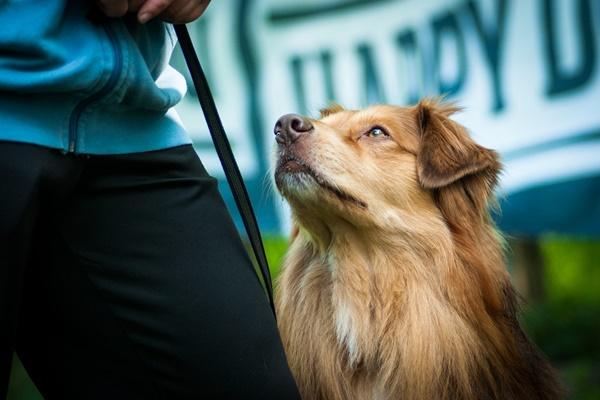 Evitare che il cane venga rubato: a cosa stare attenti e come muoversi