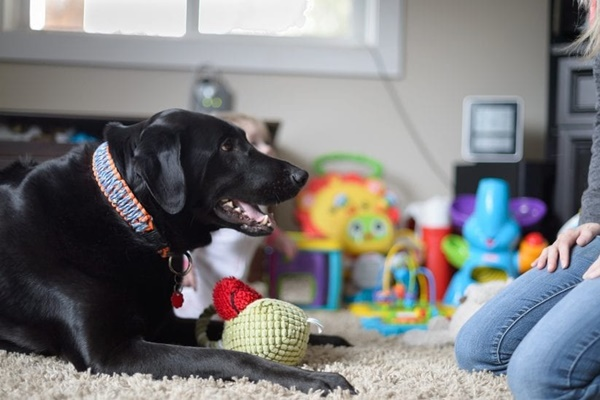 cane nero che vuole giocare