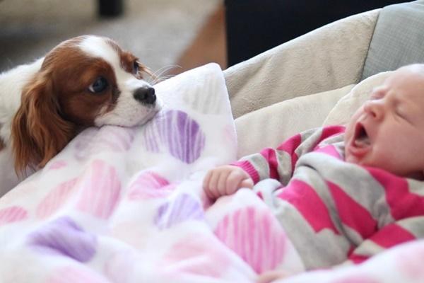 cane che guarda un bambino nella culla