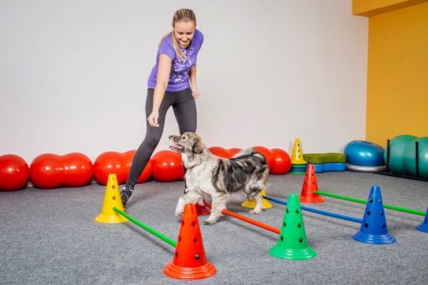 Fisioterapia per il cane: quando ce n'è bisogno e in che cosa consiste