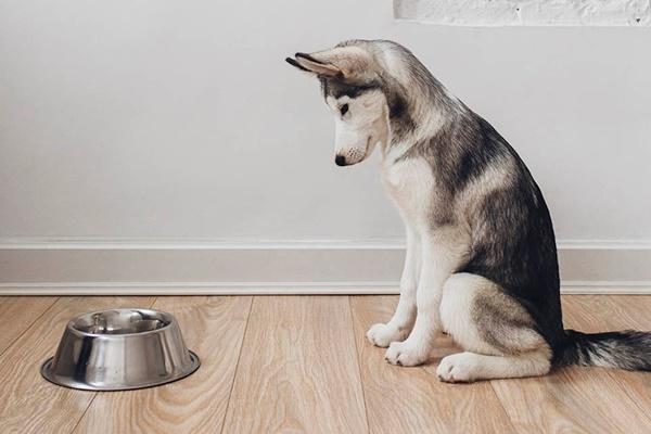 Formiche nella ciotola del cane? Ecco come eliminarle senza fare male a Fido