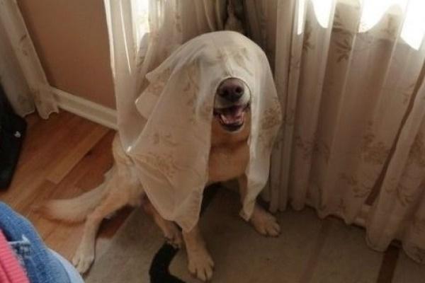 nascondino con il cane