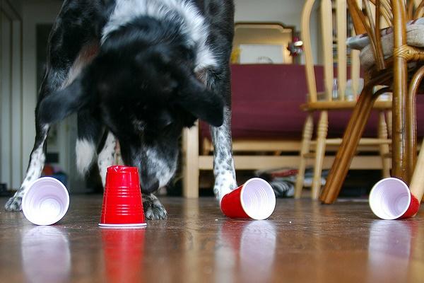 gioco dei bicchieri con il cane