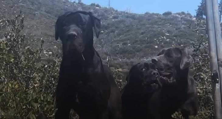 Grace, Steve, George ed il loro salvataggio sulle montagne (VIDEO)