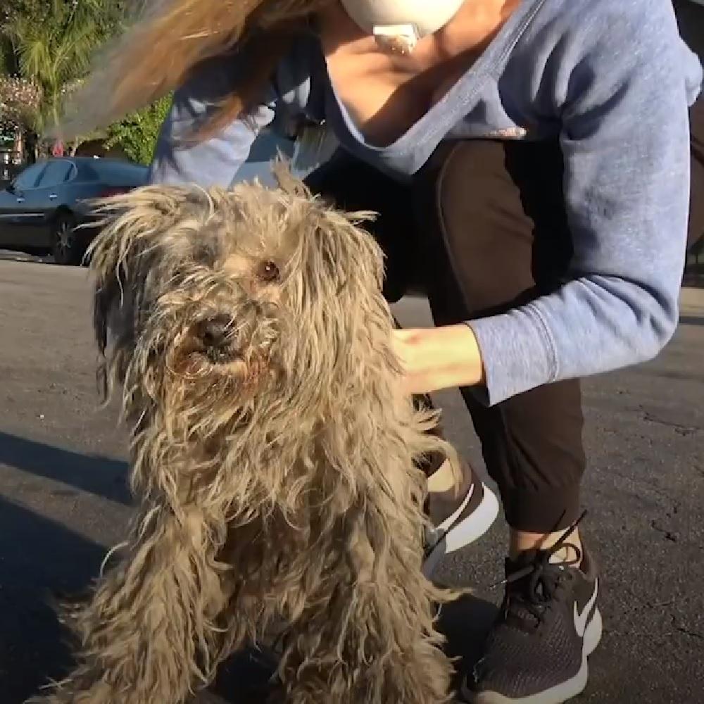 hayley cagnolina trovata sotto camper