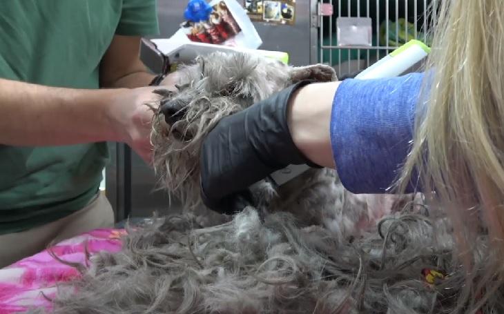 hayley cane taglio pelo