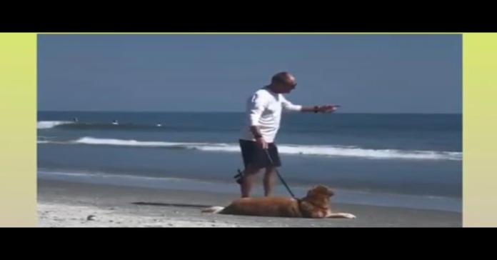 cane non vuole andar via dalla spiaggia