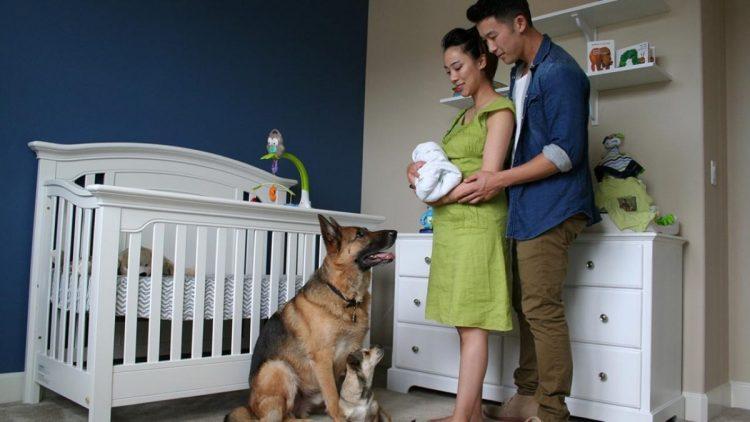 cagnolini assistenza incinta