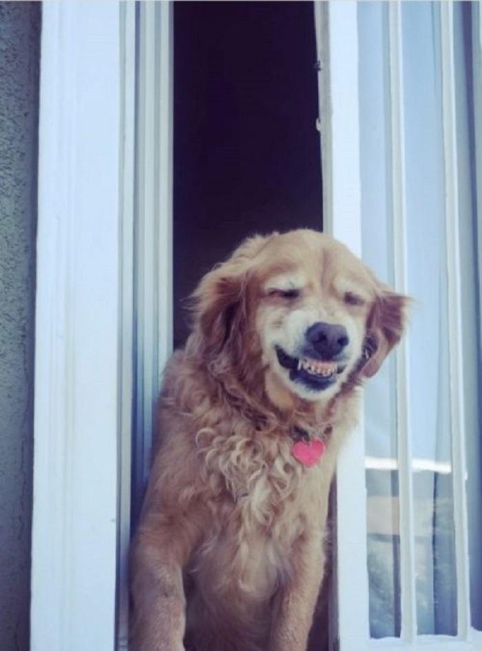 Il cagnolino Moku saluta i vicini di casa con uno splendido sorriso (VIDEO)