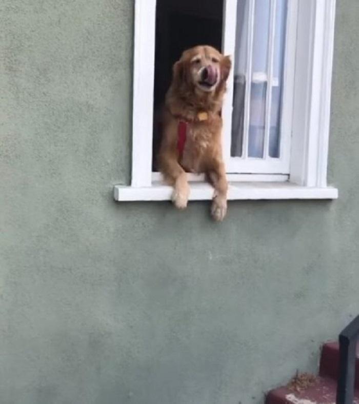 cucciolo finestra saluto