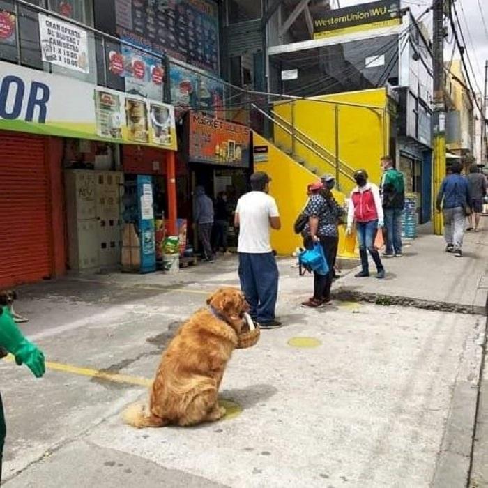 cane attesa supermercato