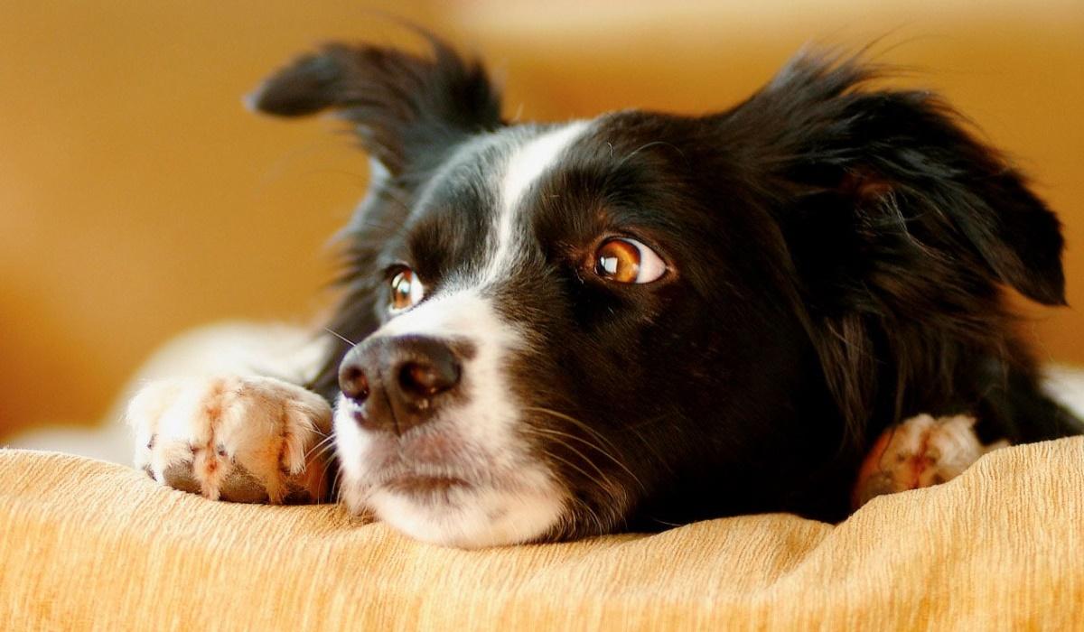 cane molto stressato