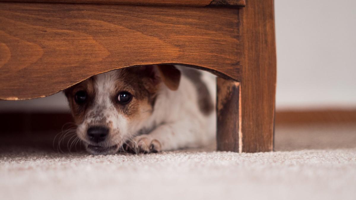 cucciolo ha paura e si nasconde