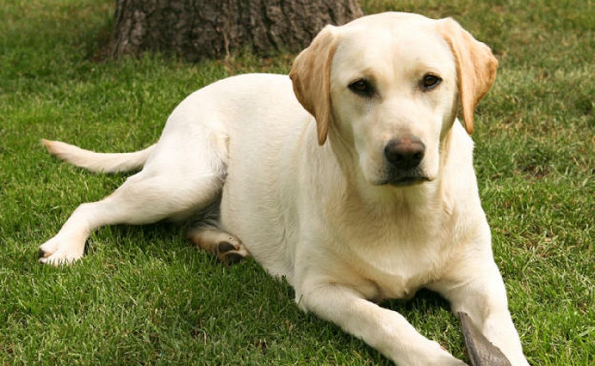 cagnolino bianco foto