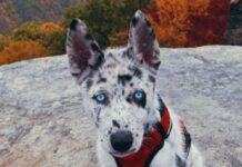 cucciolo koda adora escursioni aria aperta