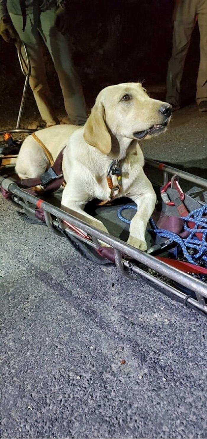 Il salvataggio di Leo, il labrador retriever che stava morendo di sete (FOTO)
