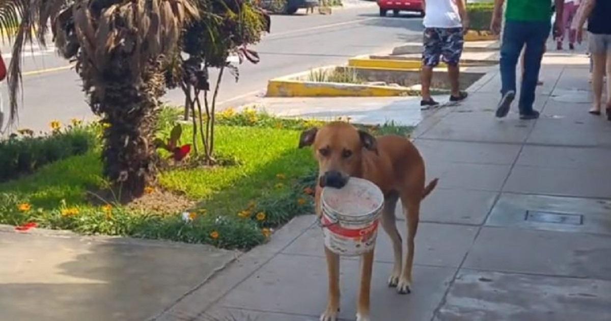 In Perù, un coraggioso cagnolino raccoglie dell'acqua per le persone bisognose (VIDEO)