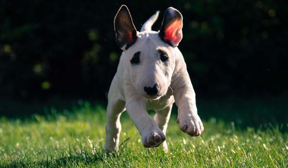 cucciolo di cane che corre sul prato