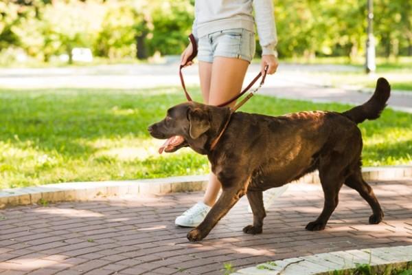 Come insegnare al cane a camminare lentamente e sempre al tuo fianco