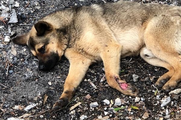 cane ferito in strada
