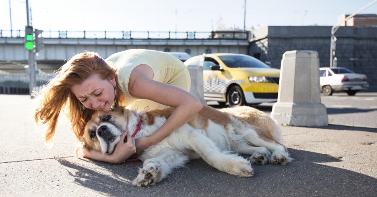 cane investito da un'automobile