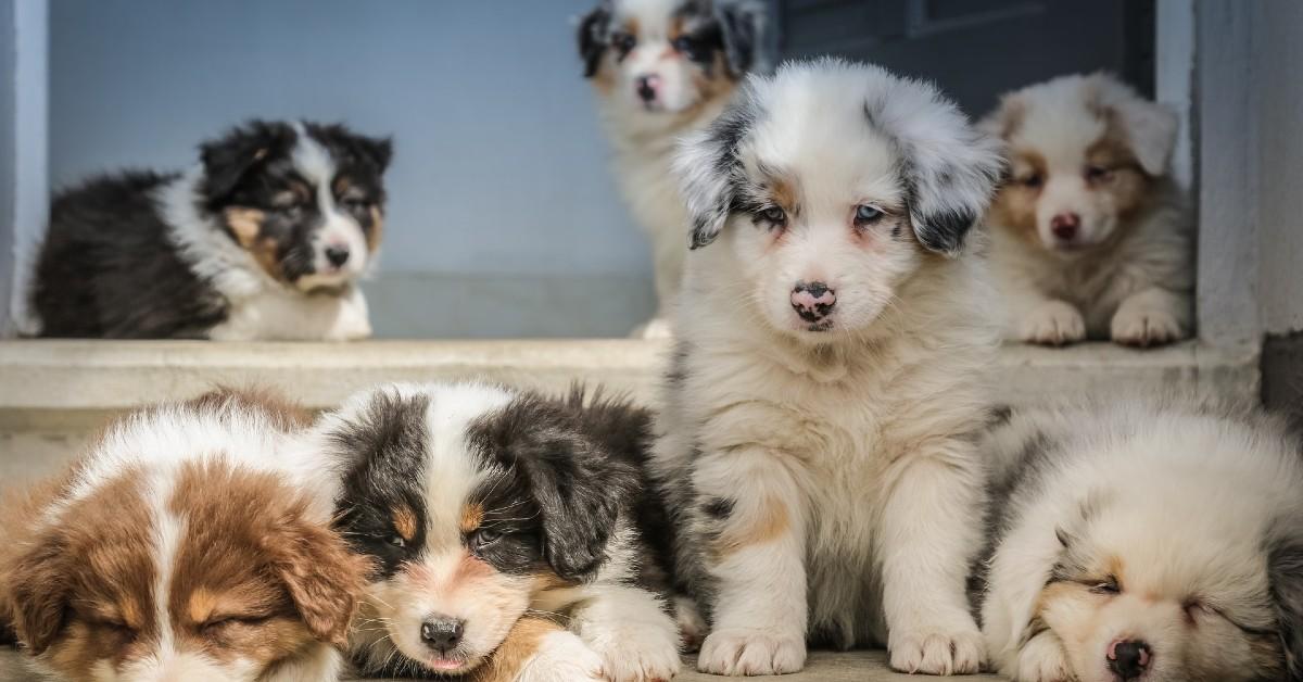 Come capire se il cucciolo di cane ha i vermi: sintomi e segnali inequivocabili