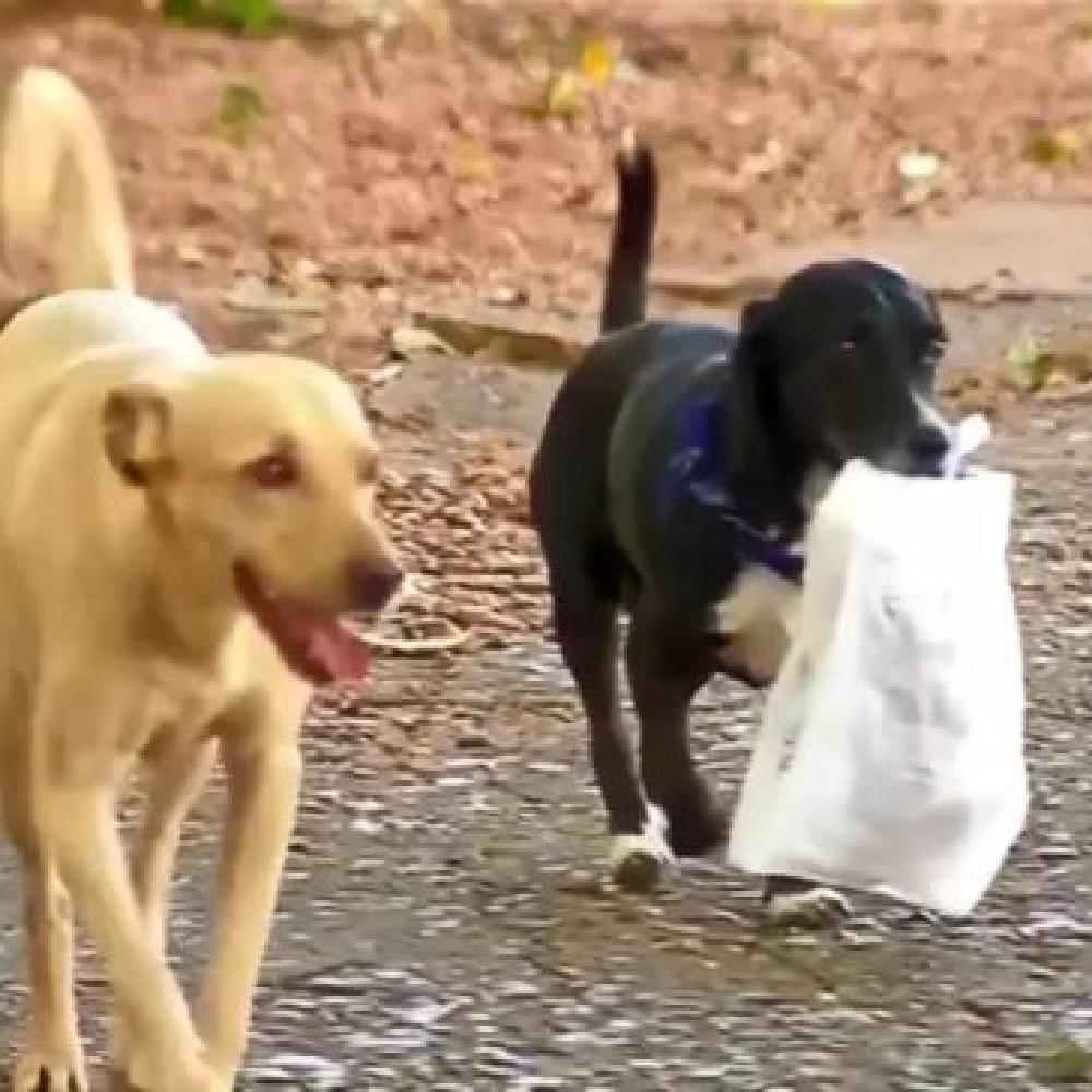 Juca, la cagnolina che porta il pane alla proprietaria (VIDEO)