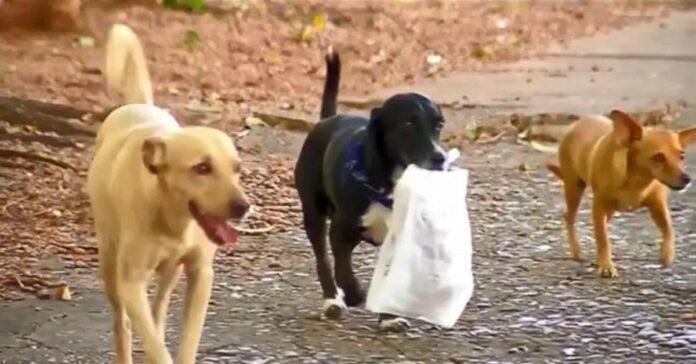 juca cagnolina che porta pane alla proprietaria