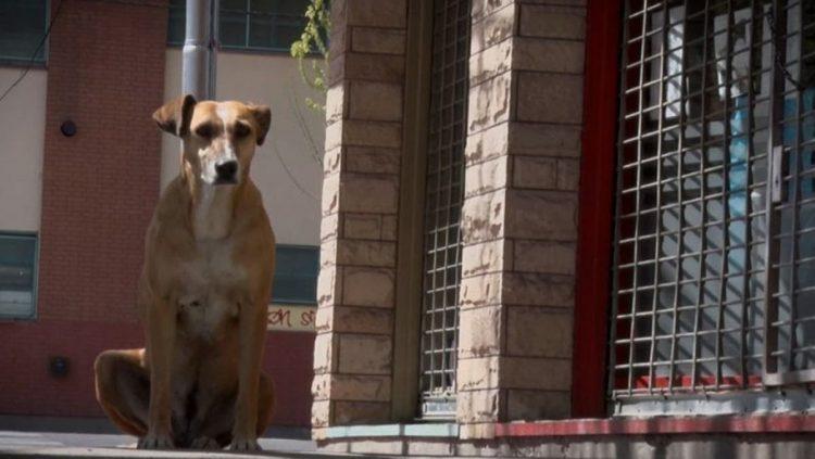 La cagnolina Bianca non accetta la perdita della donna che la accudiva (VIDEO)