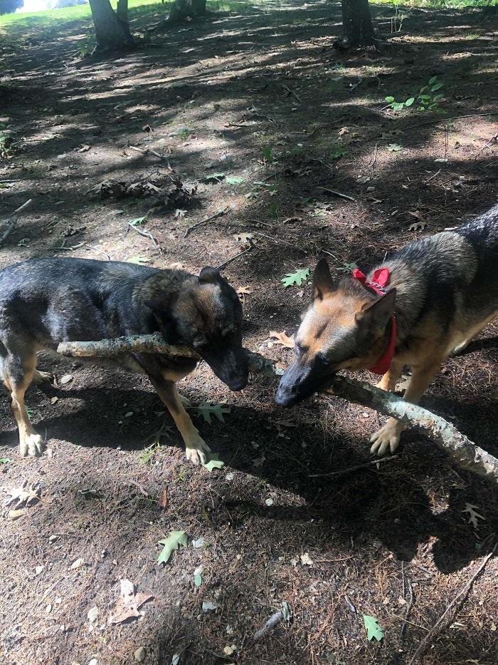 cani gioco bastone