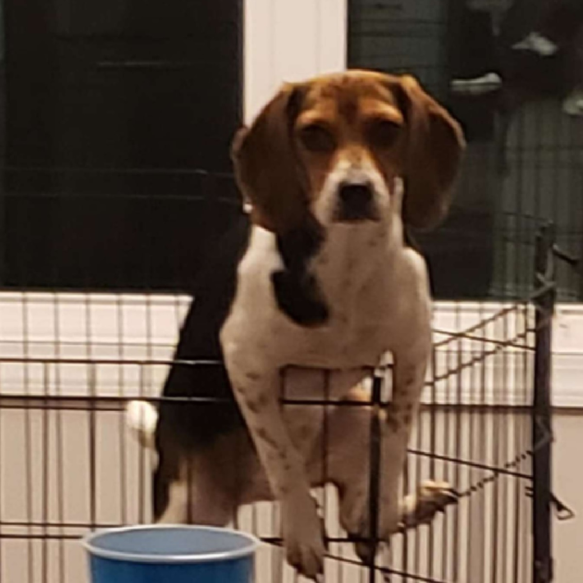 mia cagnolina rientro casa proprietaria